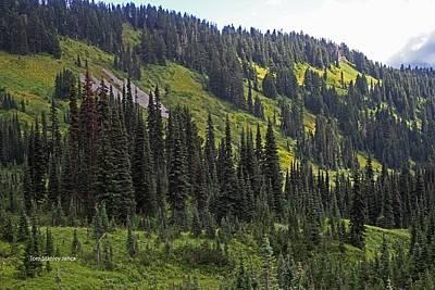 Mount Rainier Ridges And Fir Trees.. Poster by Tom Janca