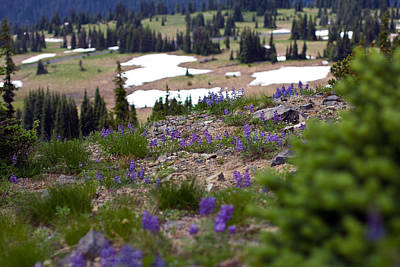 Poster featuring the photograph Mount Rainier Wildflowers by Bob Noble Photography