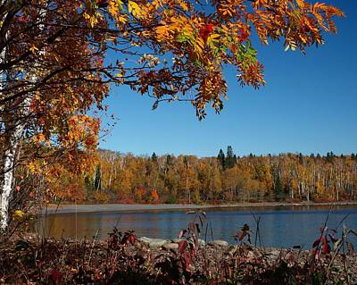 Mountain Ash In Autumn Poster