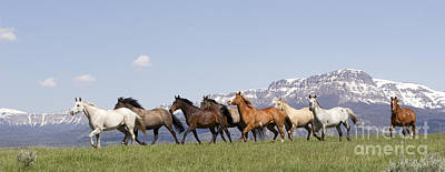 Mountain Horses Poster by Carol Walker