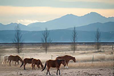 Wild Mountain Horses - Rocky Mountains Colorado Poster