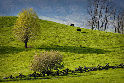 Mountain Pasture With Two Cows Poster by John Pagliuca