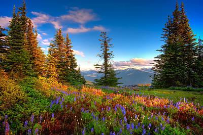 Mountain Rainier  Sunset Poster