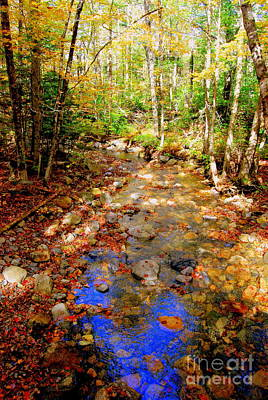 Mountain Stream Covered With Fall Leaves Poster