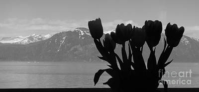 Poster featuring the photograph Mountains And Tulips by Laura  Wong-Rose