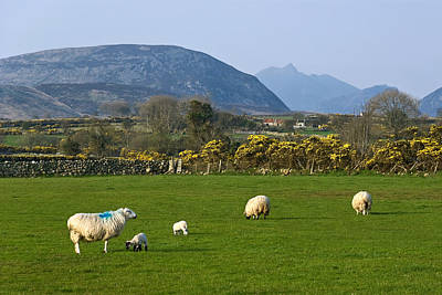 Mourne Mountains Near Kilkeel Poster by Jane McIlroy