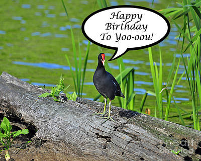 Mouthy Moorhen Birthday Card Poster