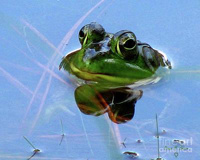 Mr. Frog Poster