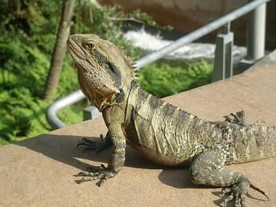 Mr Lizard Posing Poster