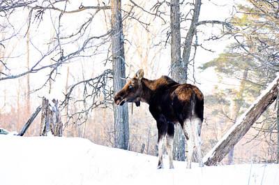 Mr. Moose Poster