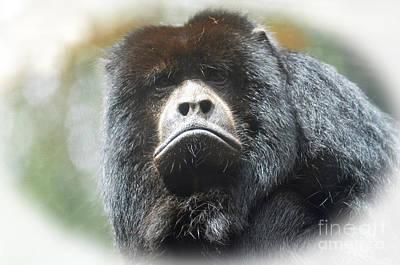 Mr Smiley A Black Howler Monkey Poster by Jim Fitzpatrick