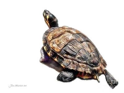Mr. Turtle Poster by Joan  Minchak