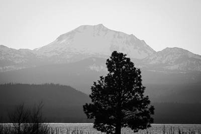 Poster featuring the photograph Mt. Lassen With Tree by Jan Davies
