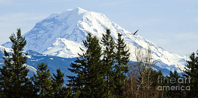 Mt. Rainier And A Bald Eagle  Poster by MaryJane Armstrong