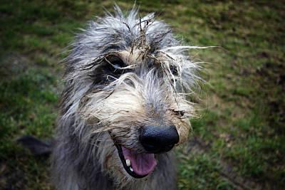 Muddy Dog Poster