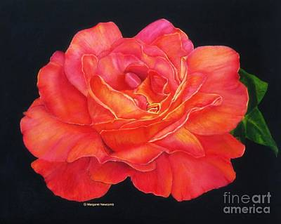 Multi-colored Rose Oils On Canvas - Print Poster by Margaret Newcomb