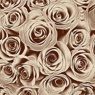 Multi Rose Sepia Poster by Joseph Hedaya