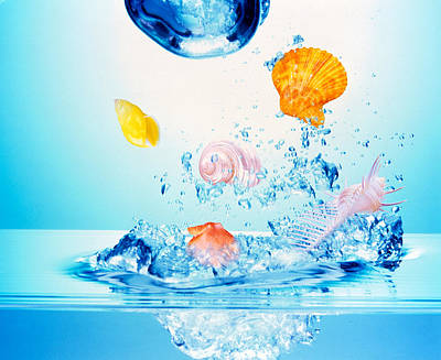 Multicolored Seashells And Water Poster