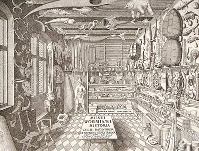 Museum Of Ole Worm, Leiden, 1655 Engraving Poster by G. Wingendorp