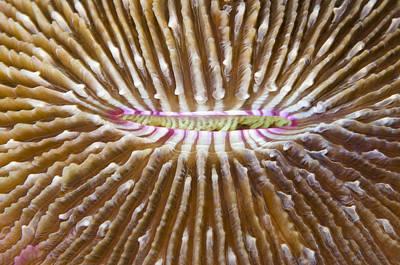Mushroom Coral Fiji Poster