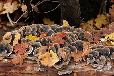 Poster featuring the photograph Mushroom Log by Ron Chilston