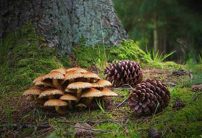 Mushrooms And Pine Cones On The Forest Poster