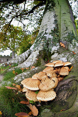 Mushrooms Growing At The Base Of A Tree Poster by John Short