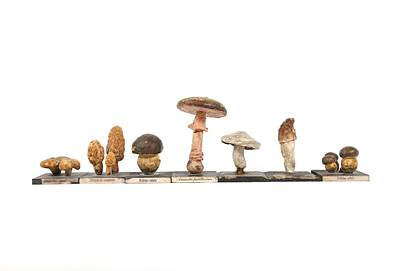 Mushrooms, Historical Model Poster by Science Photo Library