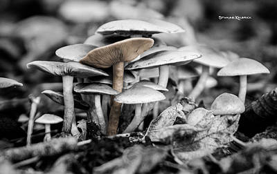 Poster featuring the photograph Mushrooms by Stwayne Keubrick