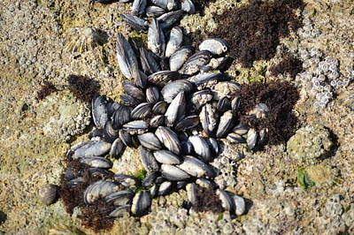 Mussels Poster by Najlae SATTE