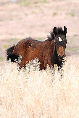 Poster featuring the photograph Mustang Colt In The Grasses by Vinnie Oakes
