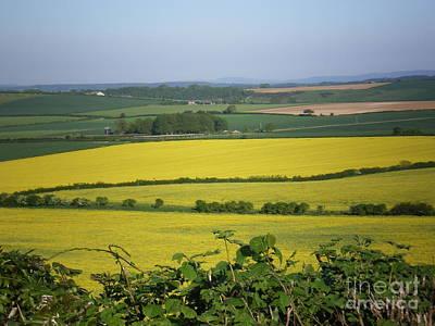 Mustard Colour Fields Poster by Ann Fellows