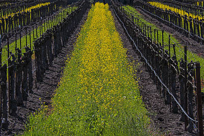 Mustard Grass In Vineyards Poster by Garry Gay