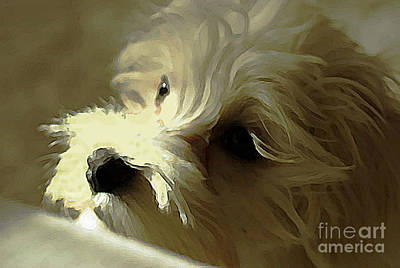 My Bichon Maltese Poster by AmaS Art