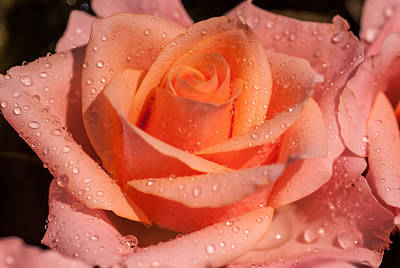My Birthday Rose Poster by Jenny Rainbow