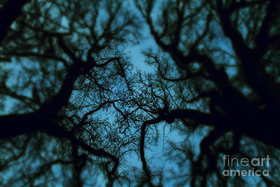 My Blue Dark Forest Poster by Stelios Kleanthous