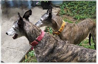 My Brindle Girls Poster