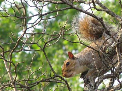 My First American Squirrel Poster by Ausra Huntington nee Paulauskaite