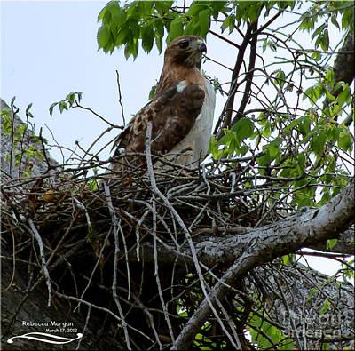My Nest Poster