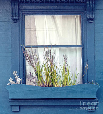 My San Francisco Window Garden Poster by Artist and Photographer Laura Wrede
