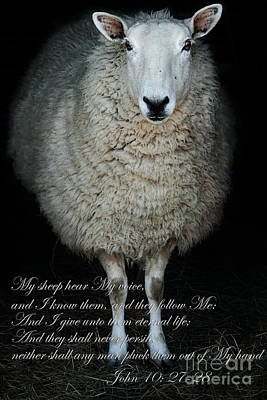My Sheep Hear My Voice Poster by Stephanie Frey