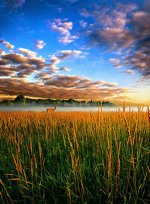 My Way Back Poster by Phil Koch