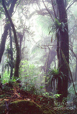 Mysterious Misty Rainforest Poster by Thomas R Fletcher