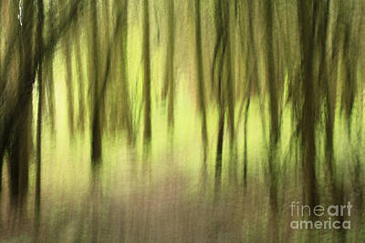 Mystic Forest Poster by Inspired Nature Photography Fine Art Photography