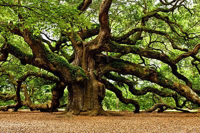 Mystical Angel Oak Tree Poster by Louis Dallara