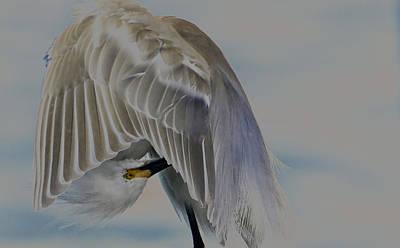 Mystical Egret Poster