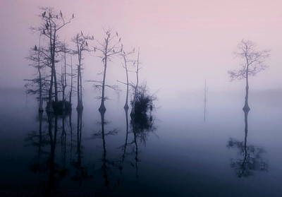 Mystical Morning On The Lake Poster by Myrna Bradshaw