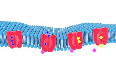 Na-k Membrane Ion Pump Poster by Science Photo Library