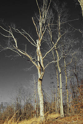 Poster featuring the photograph Naked Branches by Linda Segerson