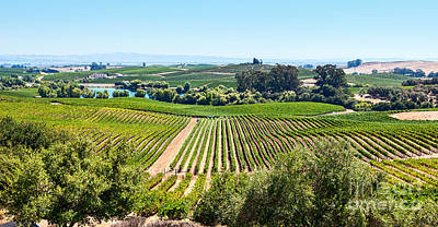 Napa Valley - Wine Vineyards In Napa Valley California. Poster